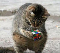 cat-with-cube
